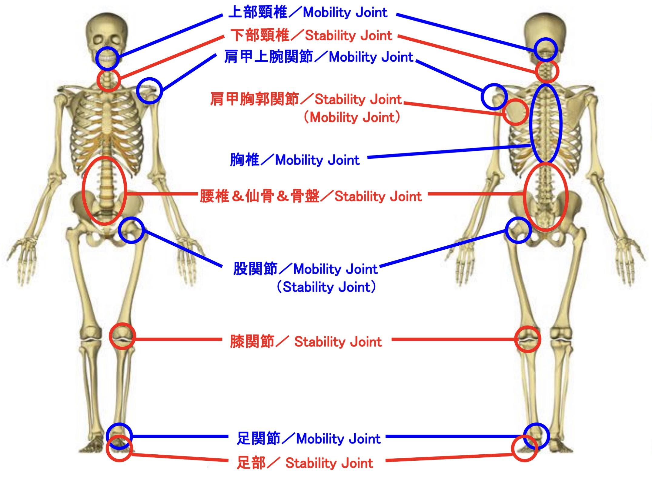 関節の役割